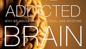 The Addicted Brain