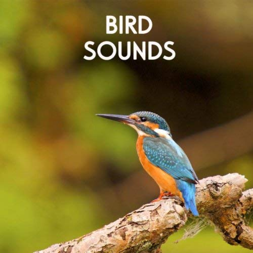 Bird Sounds  by Sounds of Nature White Noise Sound Effects
